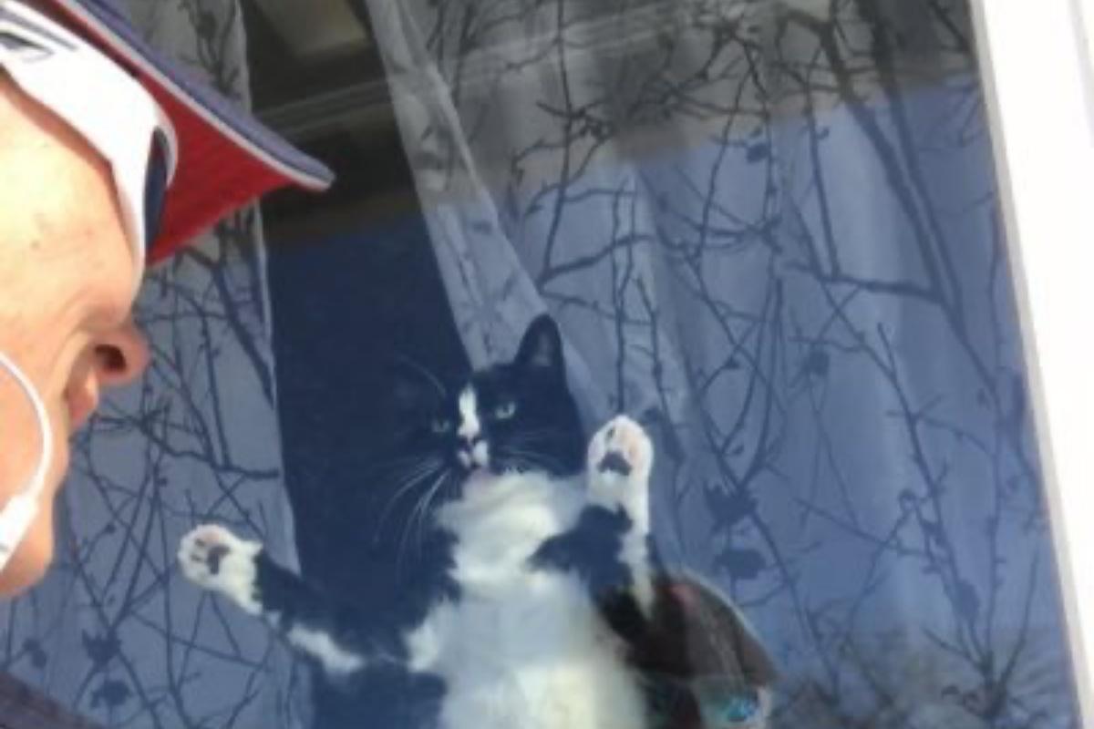 postina gatto