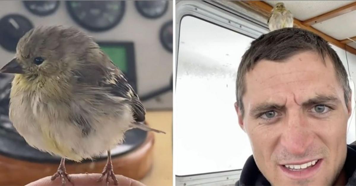Uccellino salvato da un equipaggio