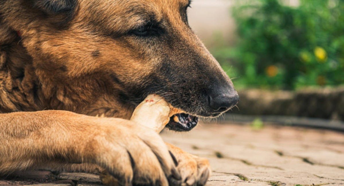 10 cose che i cani mangiano