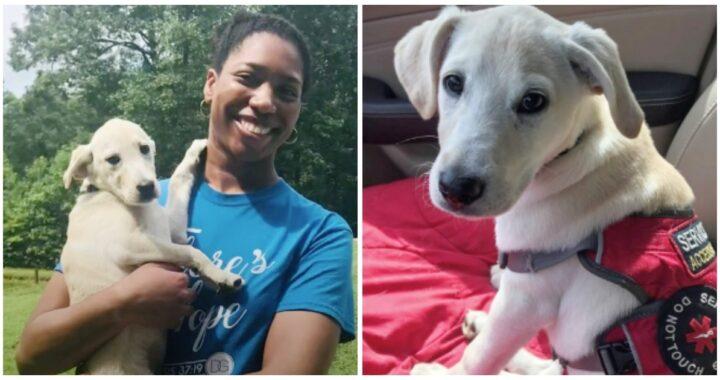 Il cucciolo Bowie, di soli 3 mesi, salva la vita tre volte alla sua proprietaria