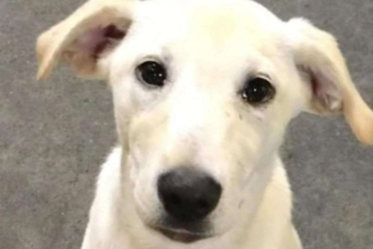 Il cagnolino Bowie avverte la sua mamma prima degli attacchi glicemici