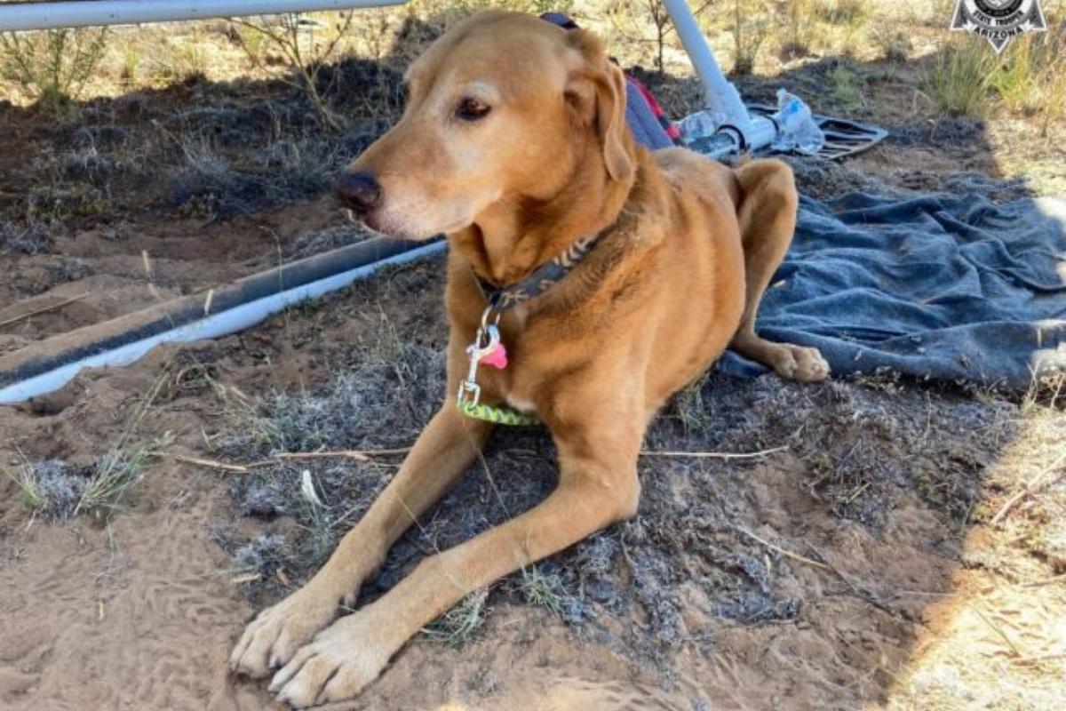La riunione di un cucciolo sopravvissuto tre giorni nel deserto