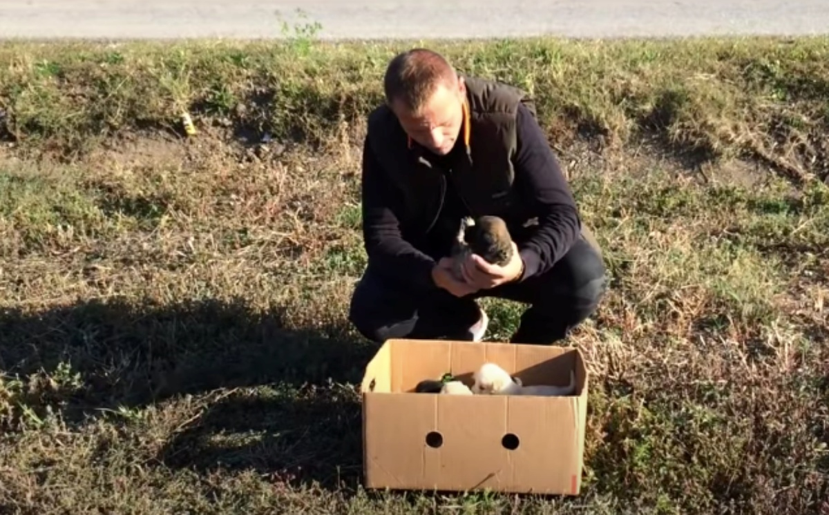 Il salvataggio di 7 cuccioli abbandonati