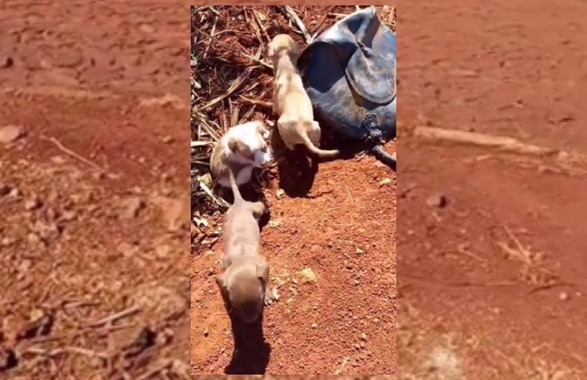 Daniel, camionista salva tre cuccioli abbandonati
