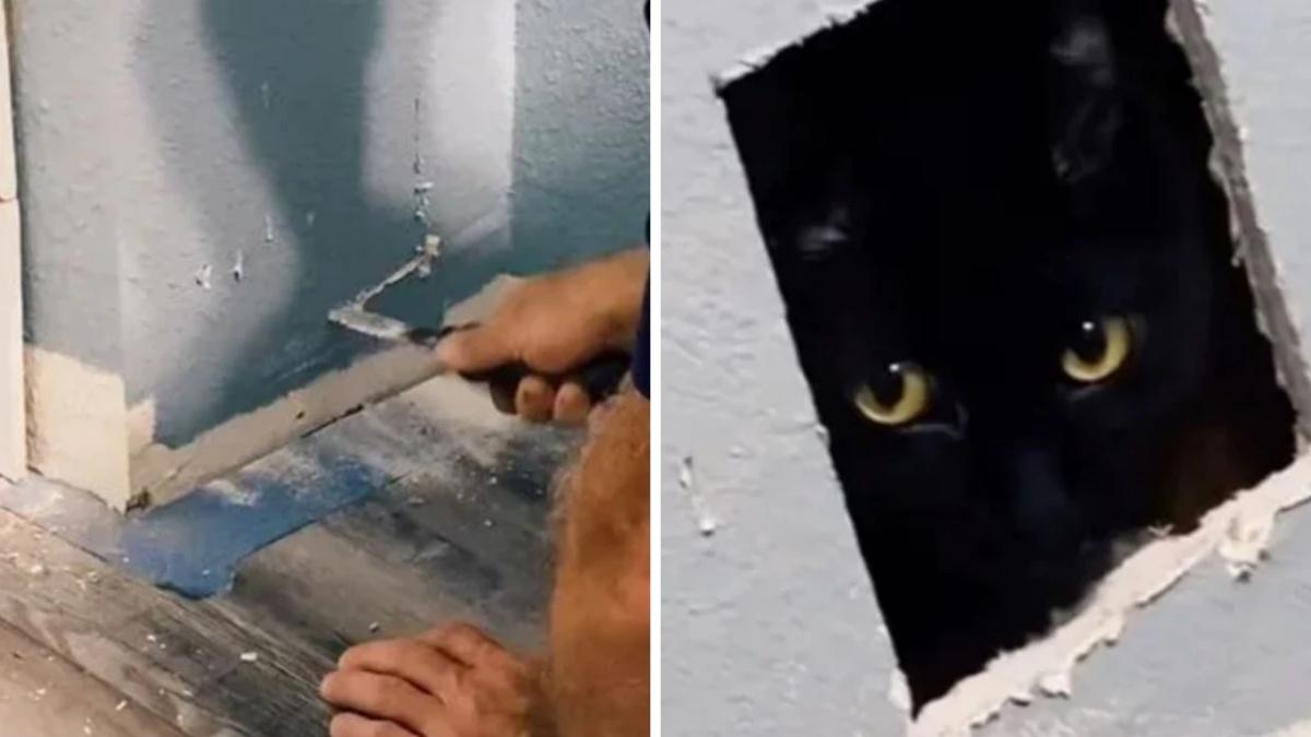 Gatto rimane intrappolato in un muro