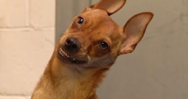La storia del cagnolino Jasper