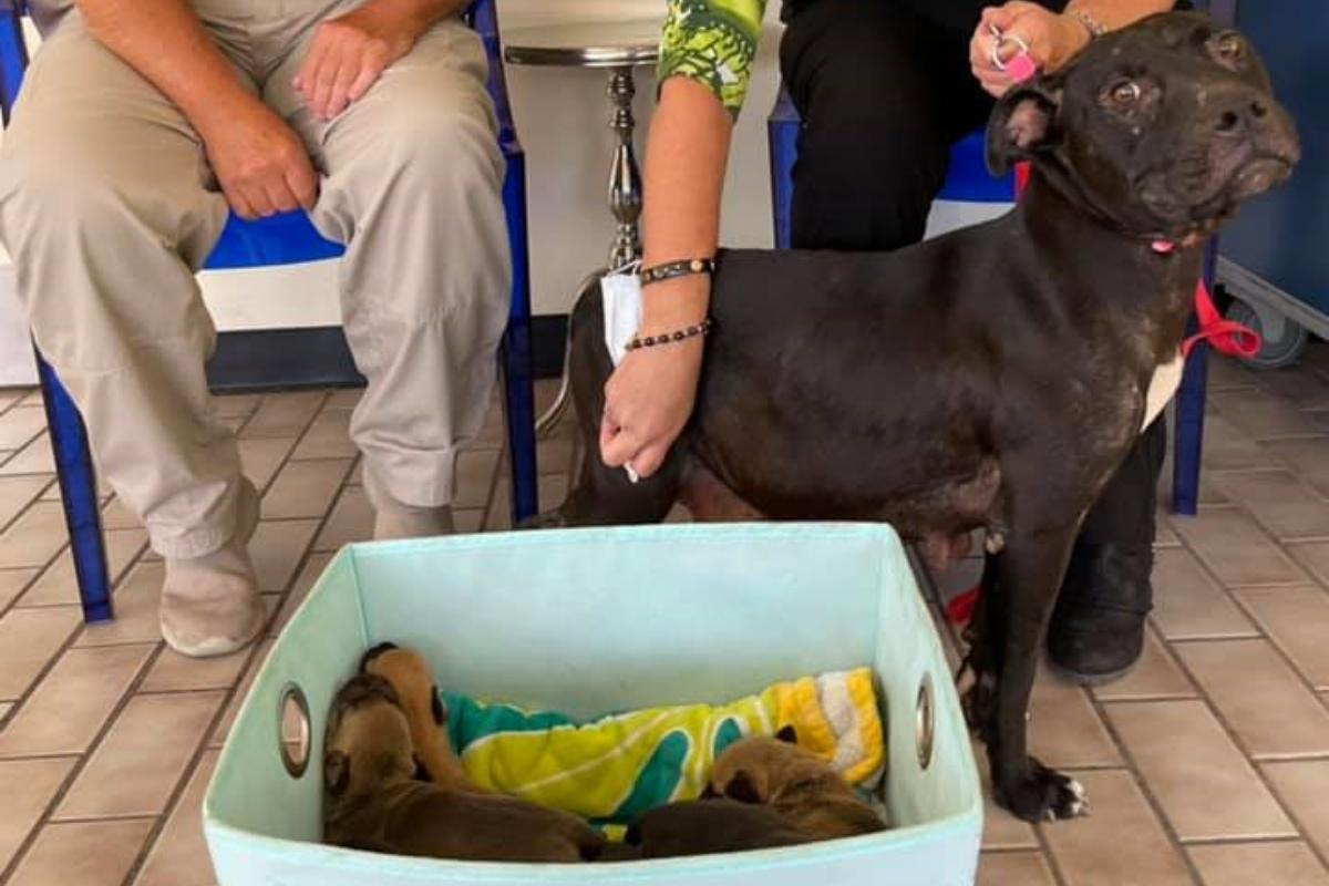 Marnie Waller salva la vita a una mamma cane e ai suoi 8 bambini