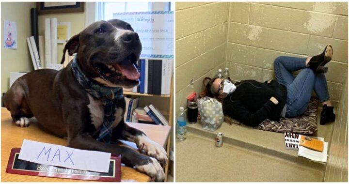 L'adozione del cane Max