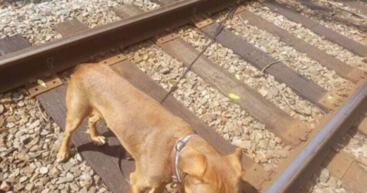 Il salvataggio del cane Max