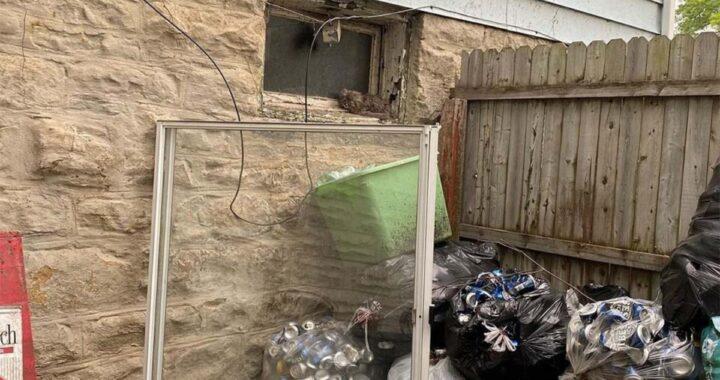 La storia della gattina Nene: trovata spaventata sul davanzale di una finestra