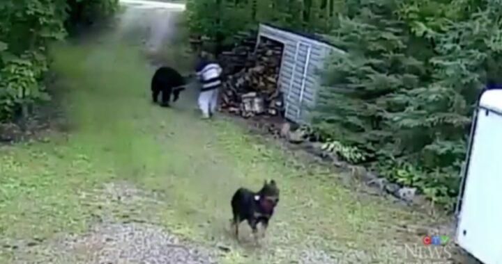 Donna difende Ozzy dall'attacco di un'orsa