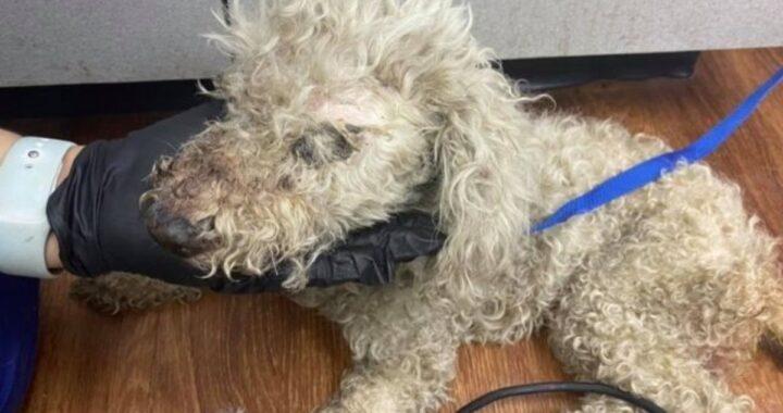 La storia del cane Petal, trovato per strada in gravi condizioni