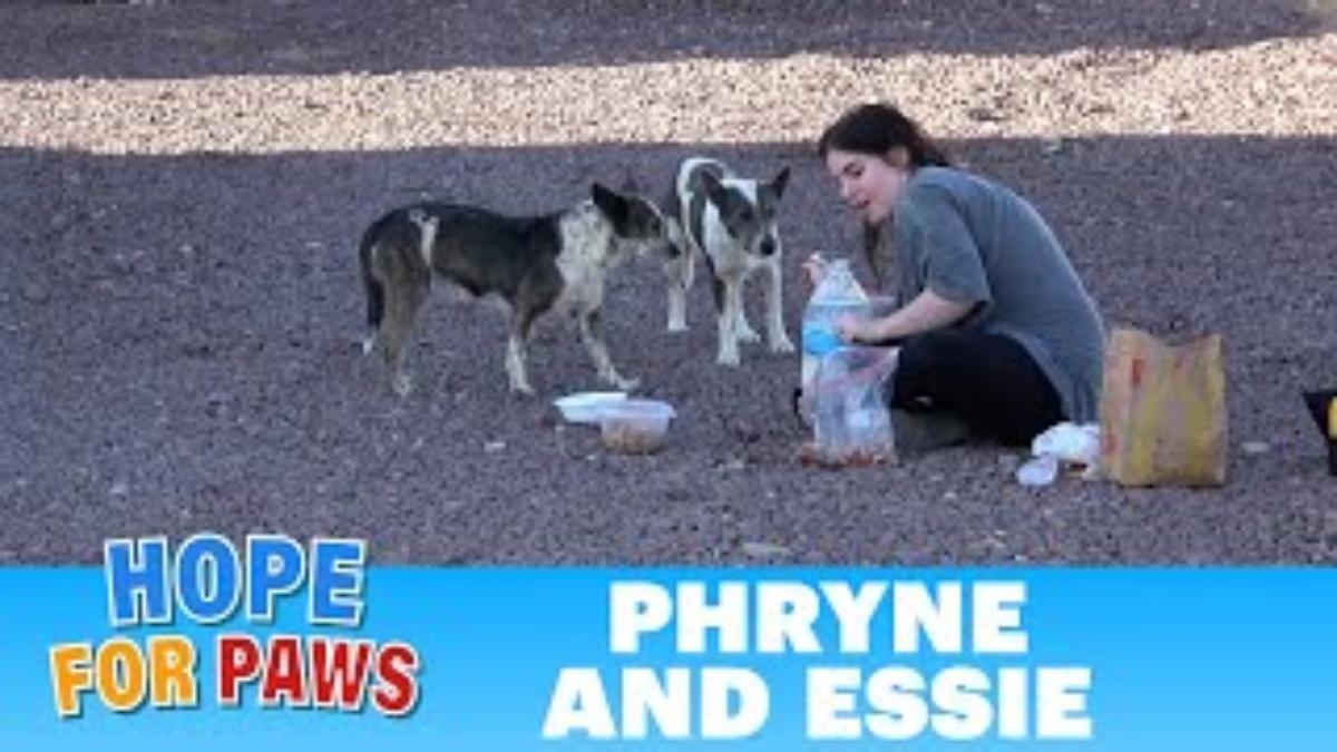 Il salvataggio di Phryne e Essie