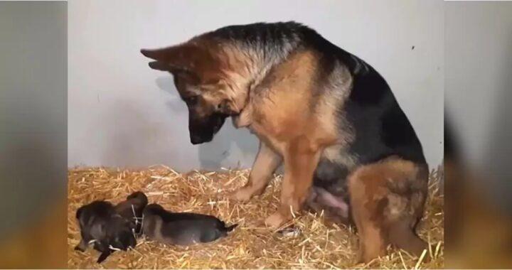 Il bellissimo video della cagnolina Pona: vede per la prima volta i suoi cuccioli