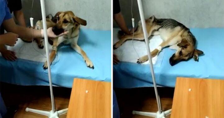 La disperazione del cane Rada
