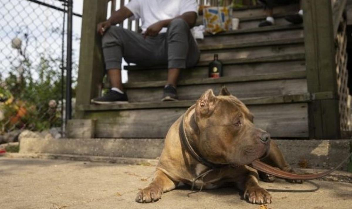 Rello il cane che ha salvato il suo papà