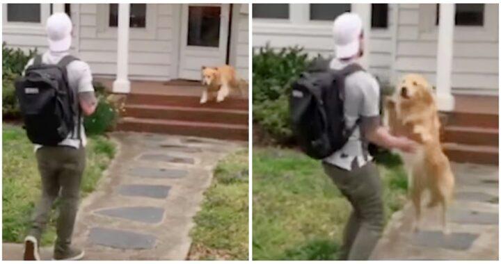 Il dolcissimo video del cane Riley