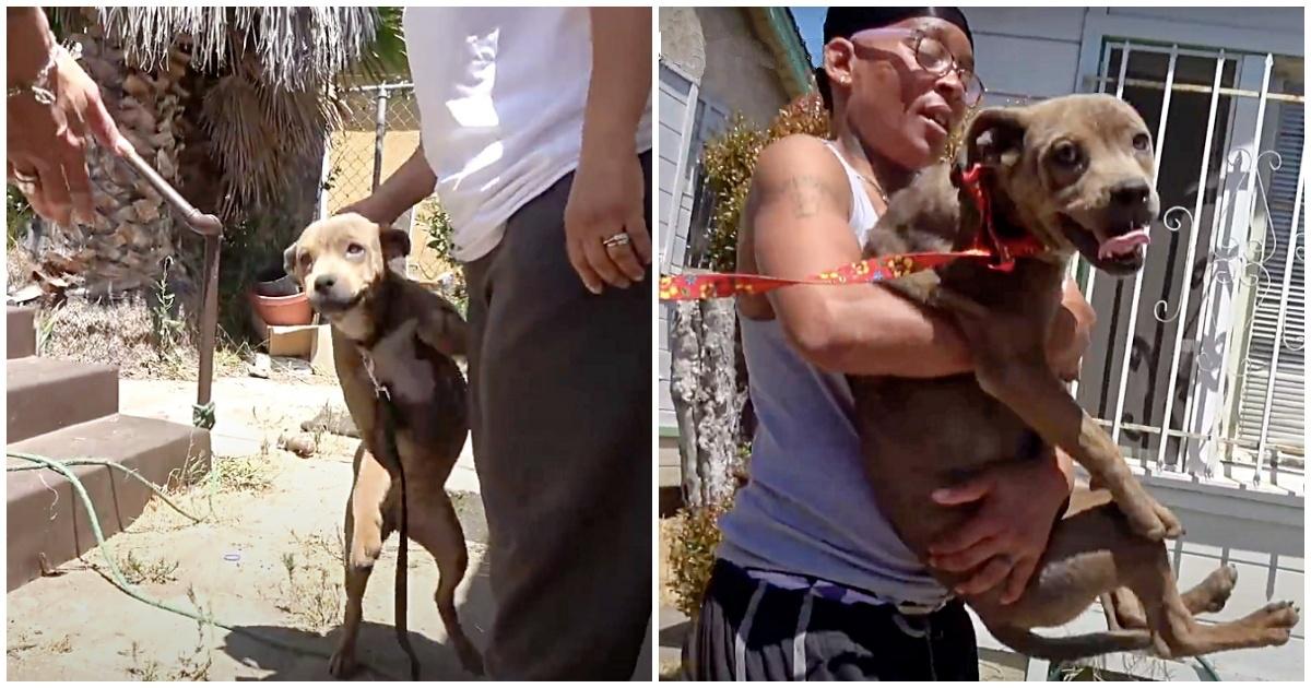 Il salvataggio del cane Sassy