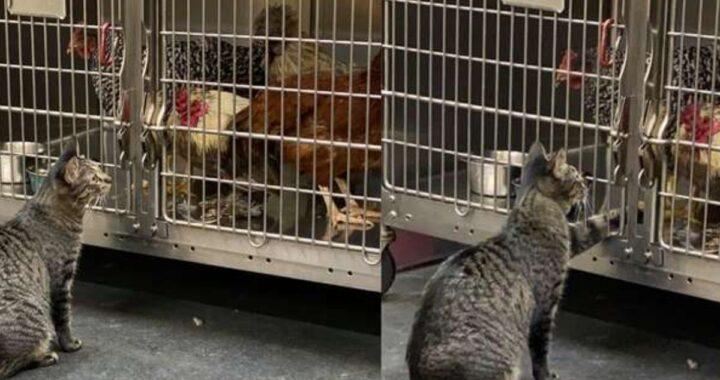 Bea, la gattina che lavora nella clinica veterinaria e che aiuta gli animali in difficoltà