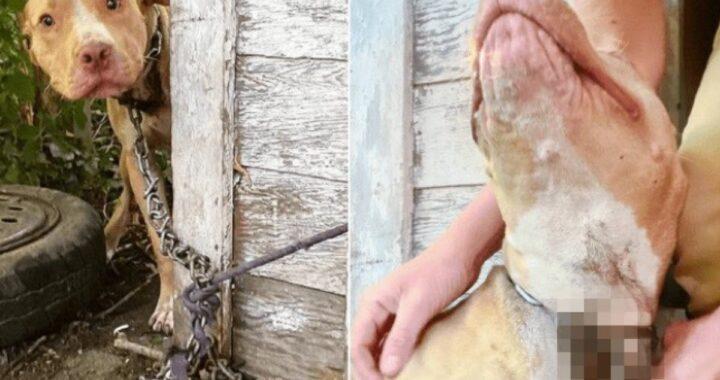 Lo ha abbandonato nel cortile di un'abitazione: la grave situazione in cui è stato trovato Beaker
