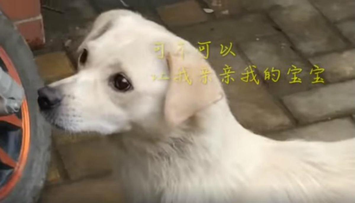 Il commovente video di una cagnolina randagia