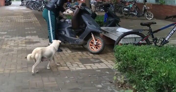 Il commovente video di una cagnolina randagia che saluta il suo cucciolo per l'ultima volta