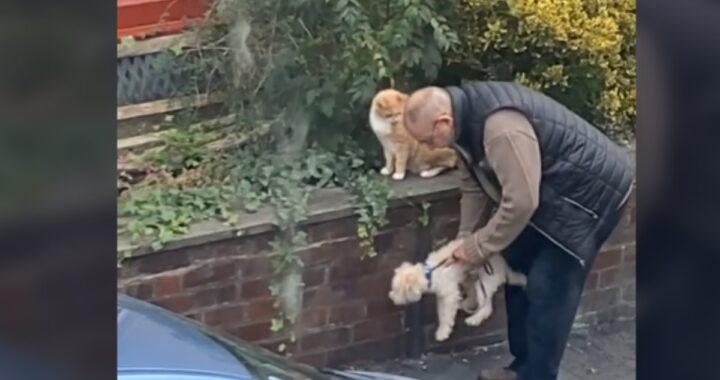 Donna sorprende un uomo anziano mentre convince il suo cagnolino a fare amicizia con un gatto per strada