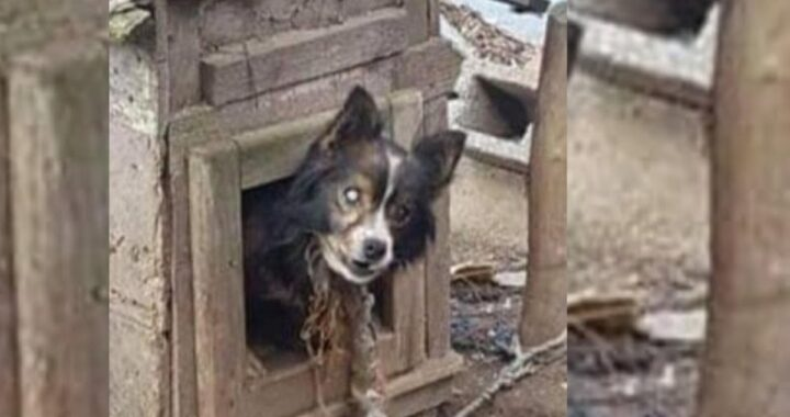 Cane cieco salvato grazie all'intervento dei volontari