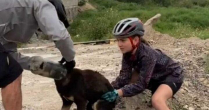 Cane con la testa incastrata in una bottiglia: salvato da un gruppo di ciclisti