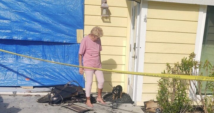 Il cane scomparso dopo l'incendio nella sua abitazione, riabbraccia i suoi amici umani diversi giorni dopo