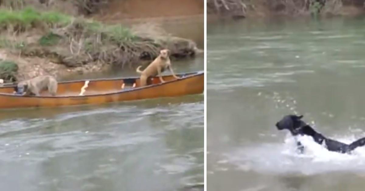 Il salvataggio di due cani