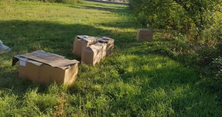 Rabbia a Fucecchio: dodici cuccioli abbandonati in delle scatole sigillate