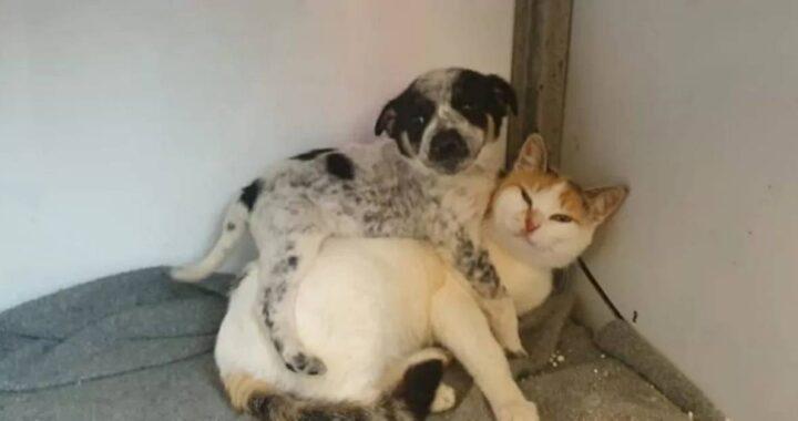 cucciolo e gattina