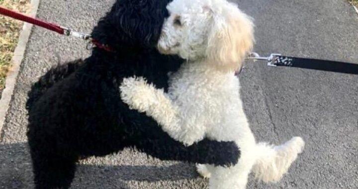 La bellissima riunione tra Monty e Rosie, due fratellini a quattro zampe che sono stati separati per 10 mesi