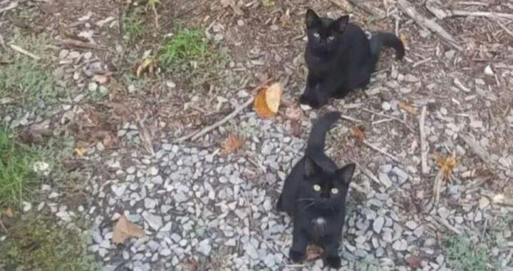 Il nuovo gioco social: quanti gatti riesci a contare?