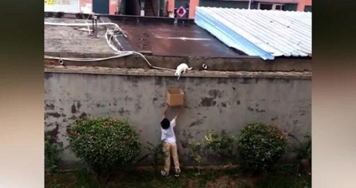 bambino salva gatto